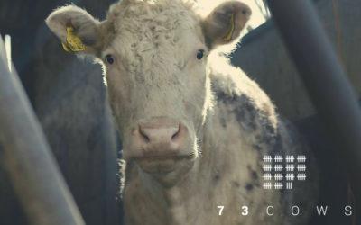 73 Cows : Une transition est possible…